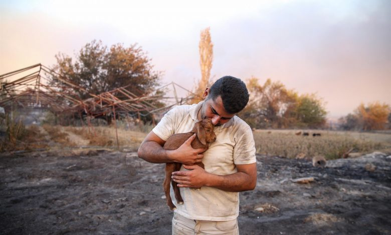 'Miracle' goat born from flames during forest fires in Turkey