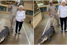 Old lady walking with crocodile